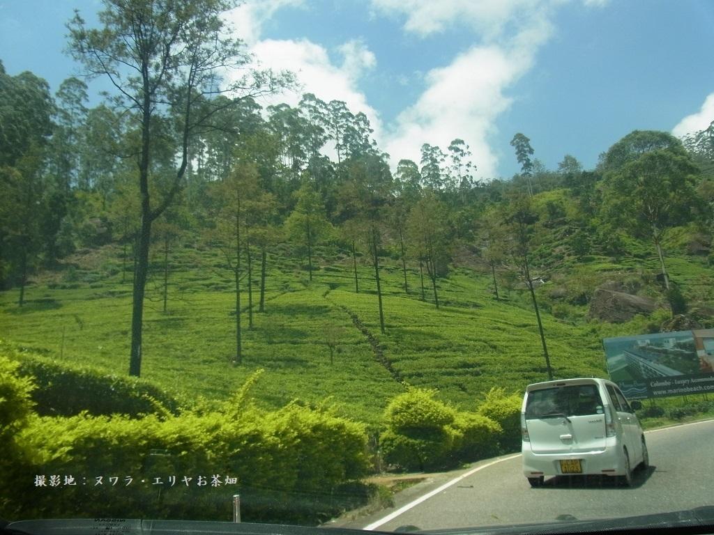 nuwaraeriya_garden.jpg