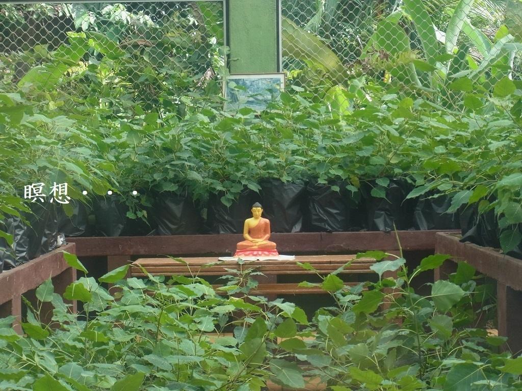 瞑想ブッダ_title-thumbnail2.jpg