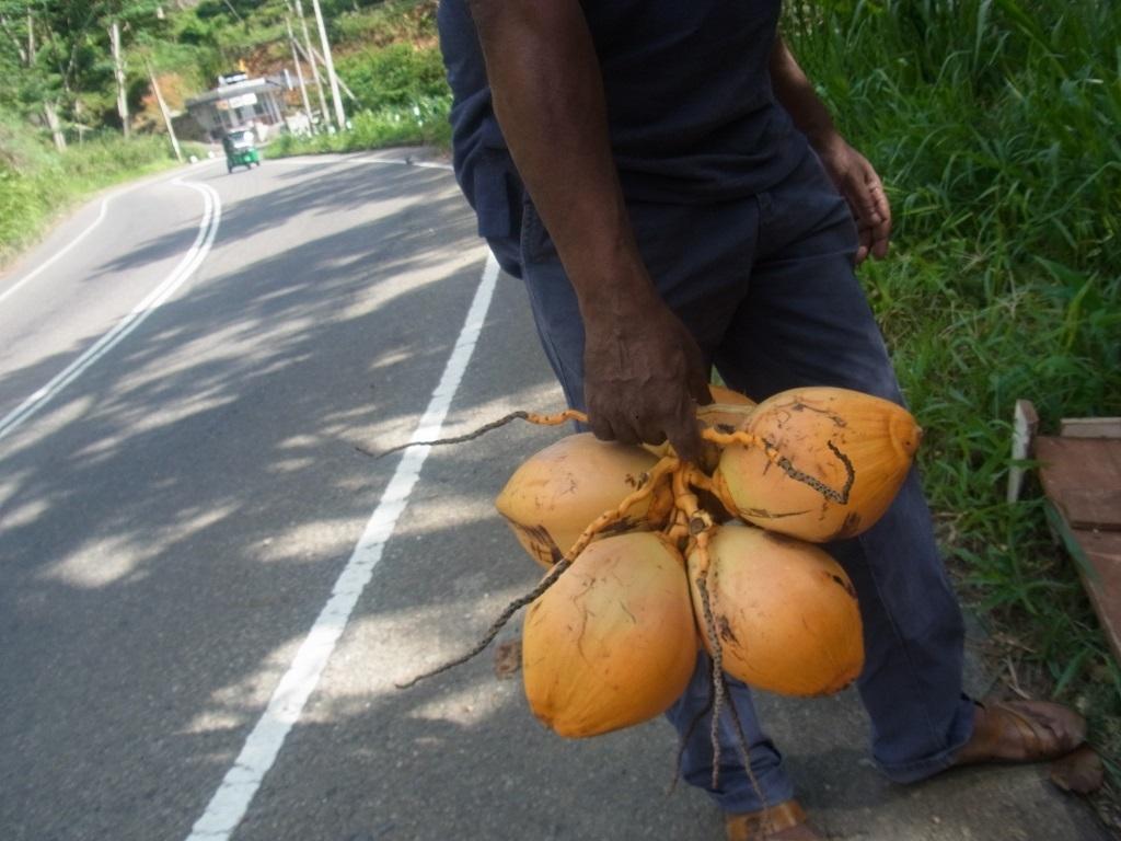 coconut-thumbnail2.jpg