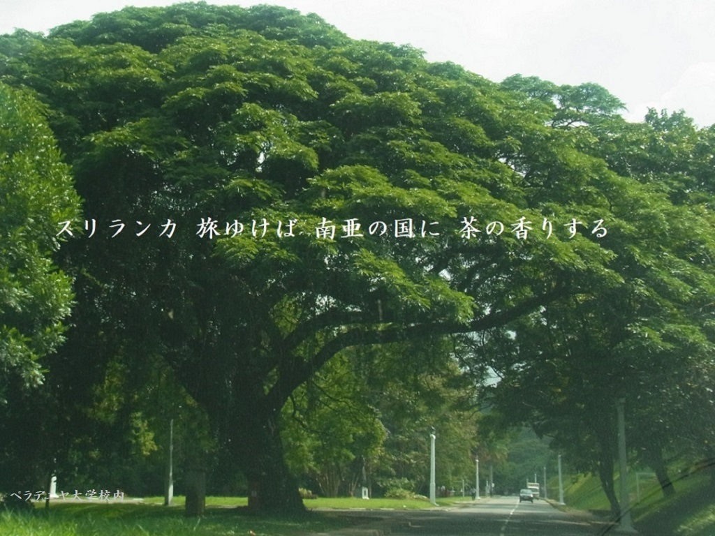 ookinaki_top-thumbnail2.jpg