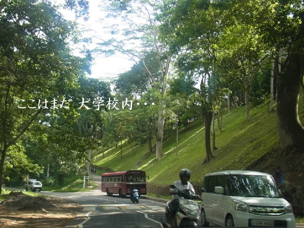 大学の道.jpg